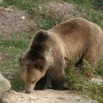 Bär im Tierpark Sainte Croix bei Rhodes