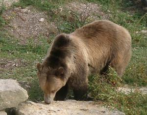 Baer-Tierpark-Sainte-Croix-bei-Rhodes