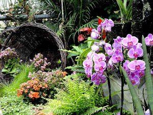 Blumen-Arrangement aus dem Schmetterlingsgarten Hunawihr