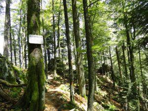 Der Felsenweg führt am Krappenfels vorbei.