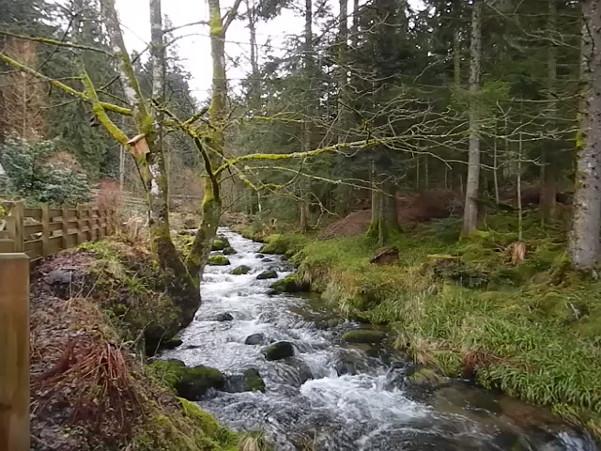 The Petite Meurthe upstream from Lancoir.