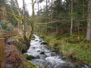La Petite Meurthe im Spät-Winter oberhalb von Lancoir.