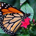Tipp fuer Elsass-Lothringen: Schmetterlingsgarten