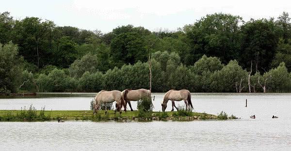 Pferde auf einer Insel mitten im See