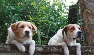 Schaun mer mal. Hunde in Lauerstellung.