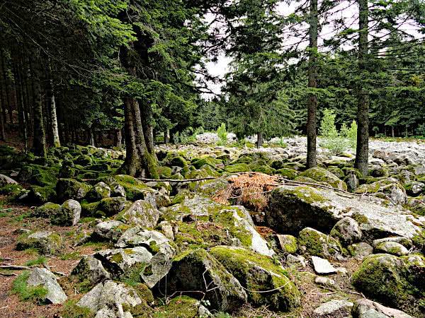 Felsenfeld Champ de roches. Die Natur holt sich ihr Recht zurück.